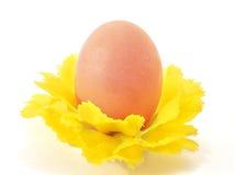 το διακοσμητικό αυγό ανθίζει ενός Στοκ εικόνα με δικαίωμα ελεύθερης χρήσης