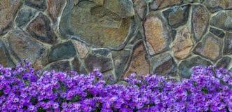 Το διακοσμητικό φθινόπωρο ανθίζει κοντά σε έναν φράκτη πετρών Στοκ φωτογραφία με δικαίωμα ελεύθερης χρήσης