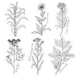 Το διανυσματικό υπόβαθρο έθεσε με το σχεδιασμό των άγριων εγκαταστάσεων, των χορταριών και των λουλουδιών, μονοχρωματική βοτανική ελεύθερη απεικόνιση δικαιώματος