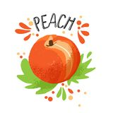 Το διανυσματικό χέρι σύρει την απεικόνιση ροδάκινων Πορτοκαλιά ώριμα ροδάκινα με τον παφλασμό χυμού που απομονώνεται στο άσπρο υπ στοκ φωτογραφίες με δικαίωμα ελεύθερης χρήσης