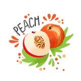 Το διανυσματικό χέρι σύρει τη χρωματισμένη απεικόνιση ροδάκινων Πορτοκαλί ροδάκινο με το κόκκαλο πολτού και φρούτων και τα πράσιν στοκ εικόνα με δικαίωμα ελεύθερης χρήσης