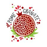 Το διανυσματικό χέρι σύρει τη χρωματισμένη απεικόνιση ροδιών Πορφυρά, κόκκινα ρόδια με τα κόκκαλα πολτού και φρούτων και τα πράσι ελεύθερη απεικόνιση δικαιώματος