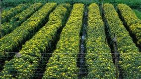 Το δραστήριο χωριό λουλουδιών στις τελευταίες ημέρες του έτους στοκ εικόνες με δικαίωμα ελεύθερης χρήσης