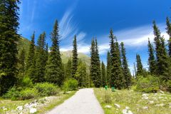 Το εθνικό πάρκο της ΑΛΑ Archa στα βουνά Tian Shan Bishkek Κιργιστάν Στοκ εικόνα με δικαίωμα ελεύθερης χρήσης