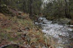 Το εθνικό πάρκο Tyresta είναι πλήρες των εκπλήξεων στοκ εικόνα