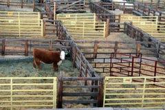Το εθνικό δυτικό απόθεμα παρουσιάζει μάνδρες βοοειδών Στοκ Φωτογραφίες