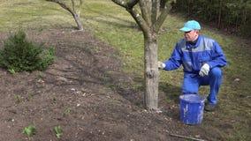 Το ειδικό άτομο κήπων ασπρίζει τα δέντρα στην άνοιξη απόθεμα βίντεο