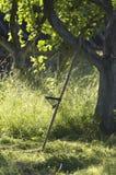 Το εκλεκτής ποιότητας ρωσικό δρεπάνι είναι κοντά στο Apple-δέντρο Στοκ Εικόνες