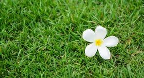 Το εκλεκτικό σημείο εστίασης λουλουδιών, υπόβαθρο θαμπάδων Στοκ Φωτογραφίες