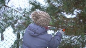 Το ελκυστικό πριονίζοντας πεύκο γυναικών διακλαδίζεται στο χειμερινό χιονώδη κήπο της για τη Χαρούμενα Χριστούγεννα και καλή χρον φιλμ μικρού μήκους