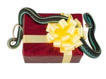 Το ενήλικο φίδι με την ένωση γλωσσών του είναι έξω στο κόκκινο κιβώτιο δώρων με ένα κίτρινο τόξο Στοκ Φωτογραφία