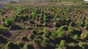 Το εναέριο βλασταημένο πέταγμα πολύ χαμηλό πέρα από τα δέντρα και τρίβει στην αγριότητα πλάνο Εναέρια άποψη που πετά πέρα από την φιλμ μικρού μήκους