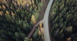 Το εναέριο μήκος σε πόδηα πέρα από το πράσινο πεύκο και το κίτρινο δάσος σημύδων με το δρόμο στη μέση του, κάμερα ακολουθεί το δρ φιλμ μικρού μήκους