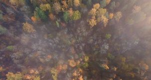 Το εναέριο μήκος σε πόδηα του δάσους, κάμερα χαμηλώνει κάτω αργά, αρχικός από τα σύννεφα απόθεμα βίντεο