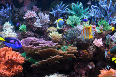 Το ενυδρείο αλιεύει τη βαθιά ωκεάνια ζωή Στοκ εικόνα με δικαίωμα ελεύθερης χρήσης