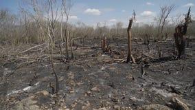Το εξασθενίζοντας ξέφωτο στο δάσος έκαψε τα μαύρα δέντρα κατά μήκος το φιλμ μικρού μήκους