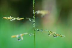 Το εξωτικό φύλλο φυτών κινηματογραφήσεων σε πρώτο πλάνο με το νερό μειώνεται, όμορφη πράσινη σύσταση χλοών με τις πτώσεις του νερ στοκ εικόνες