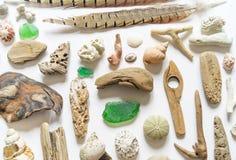 Το επίπεδο συλλογής θαλασσινών κοχυλιών και ραβδιών, κοραλλιών προσκρούσεων και φτερών βάζει ακόμα τη ζωή είναι φυσικό υλικό Καφε στοκ φωτογραφίες