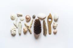 Το επίπεδο συλλογής θαλασσινών κοχυλιών και ραβδιών, κοραλλιών προσκρούσεων και φτερών βάζει ακόμα τη ζωή είναι φυσικό υλικό Καφε στοκ εικόνες με δικαίωμα ελεύθερης χρήσης
