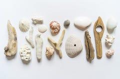 Το επίπεδο συλλογής θαλασσινών κοχυλιών και ραβδιών, κοραλλιών προσκρούσεων και φτερών βάζει ακόμα τη ζωή είναι φυσικό υλικό Καφε στοκ φωτογραφίες με δικαίωμα ελεύθερης χρήσης