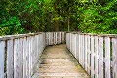 Το ευγενές ίχνος, στο κρατικό πάρκο πτώσεων της Μπλακγουότερ, δυτική Βιρτζίνια Στοκ Φωτογραφία