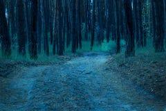 Το ευρύ ίχνος κατεβαίνει στο μυστήριο δάσος βραδιού Στοκ φωτογραφίες με δικαίωμα ελεύθερης χρήσης
