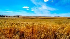 Το ευρύ ανοικτό καλλιεργήσιμο έδαφος και τα απόμακρα βουνά κατά μήκος N3 μεταξύ του φύλακα και Villiers στην ελεύθερη κρατική επα Στοκ Φωτογραφίες