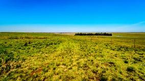 Το ευρύ ανοικτό καλλιεργήσιμο έδαφος κατά μήκος R39 στην περιοχή ποταμών Vaal νότιου Mpumalanga στοκ εικόνα