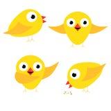 Το ευτυχές κίτρινο τραγουδώντας τόξο κοτόπουλου και τρώει Στοκ φωτογραφία με δικαίωμα ελεύθερης χρήσης