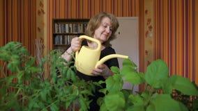 Το ευτυχές ώριμο θηλυκό πότισμα κηπουρών βλαστάνει στο σπίτι απόθεμα βίντεο