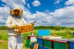 Το ευτυχές apiarist, μελισσοκόμος κρατά το σφραγισμένο πλήρες κυψελωτό πνεύμα Στοκ Εικόνα