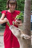 Το ευτυχές youngwomanl που ταΐζει τα όμορφα ελάφια από παραδίδει ένα τροπικό πάρκο ζωολογικών κήπων του Μπαλί, Ινδονησία Στοκ φωτογραφία με δικαίωμα ελεύθερης χρήσης