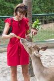 Το ευτυχές youngwomanl που ταΐζει τα όμορφα ελάφια από παραδίδει ένα τροπικό πάρκο ζωολογικών κήπων του Μπαλί, Ινδονησία Στοκ Εικόνα