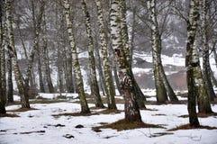 Το ελατήριο thaw_5 Μαρτίου Στοκ Εικόνες