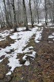 Το ελατήριο thaw_2 Μαρτίου Στοκ εικόνα με δικαίωμα ελεύθερης χρήσης
