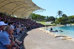 Το δελφίνι παρουσιάζει στο παγκόσμιο Gold Coast Αυστραλία θάλασσας Στοκ Φωτογραφία