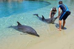 Το δελφίνι παρουσιάζει στο παγκόσμιο Gold Coast Αυστραλία θάλασσας Στοκ Εικόνες