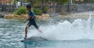 Το δελφίνι παρουσιάζει στο παγκόσμιο Gold Coast Αυστραλία θάλασσας Στοκ εικόνα με δικαίωμα ελεύθερης χρήσης