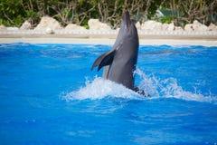Το δελφίνι παρουσιάζει Στοκ Φωτογραφίες