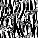 Το ζέβες άνευ ραφής σχέδιο επιφάνειας, γραπτό Zebras επαναλαμβάνει το σχέδιο για το υφαντικό σχέδιο, εκτύπωση υφάσματος, στάσιμος ελεύθερη απεικόνιση δικαιώματος