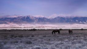 Το ζευγάρι των αλόγων βόσκει τη χλόη στην κοιλάδα με το τοπίο βουνών απόθεμα βίντεο