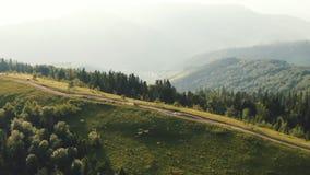 Το ζεύγος οδηγά σε ένα ποδήλατο τετραγώνων Εναέριος δρόμος βουνών άποψης Καρπάθιος στο δασικό τοπίο r απόθεμα βίντεο