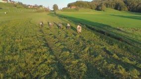 Το ζεύγος περπατά στους αγρότες όταν κόβουν τη χλόη απόθεμα βίντεο
