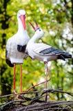 Το ζεύγος πουλιών ` s είναι σχεδόν οικογένεια Στοκ εικόνες με δικαίωμα ελεύθερης χρήσης