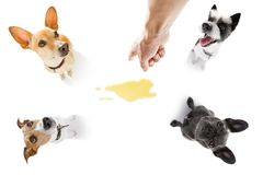 Το ζεύγος των σκυλιών κατουρεί ούρα στο σπίτι στοκ εικόνα με δικαίωμα ελεύθερης χρήσης