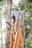 Το ζωηρόχρωμο δέντρο Στοκ Φωτογραφία