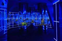 Το ζωηρόχρωμο εσωτερικό του Dolphinarium στο Novosibirsk Στοκ φωτογραφίες με δικαίωμα ελεύθερης χρήσης