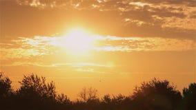 Το ζωηρόχρωμο ηλιοβασίλεμα, πουλιά πετά ενάντια στον ήλιο ρύθμισης, ζωηρόχρωμο ηλιοβασίλεμα στη φύση απόθεμα βίντεο