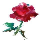 Το ζωηρόχρωμο κόκκινο λουλουδιών υποβάθρου τέχνης Watercolor αυξήθηκε Στοκ Εικόνες