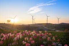 Το ζωηρόχρωμο λουλούδι και ο μεγάλος ανεμοστρόβιλος είναι υπόβαθρο Στοκ Εικόνα